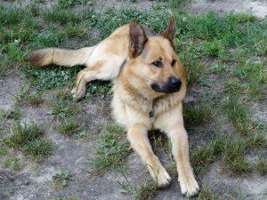 Esterilización de perros y gatos: Veterinarios especialistas